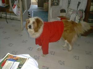 Jake in sweater