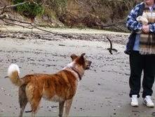 Sheila on beach Willapa Bay