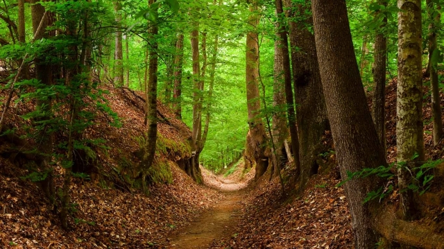 middle-tennessee-walking-trails-near-hideaway-at-arrington-include-the-Natchez-trace-national-scenic-trail